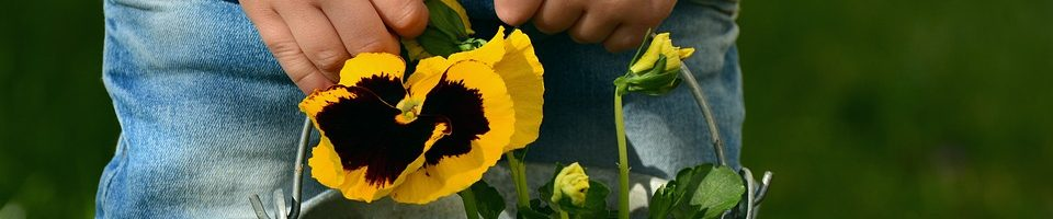 image mains enfant fleurs